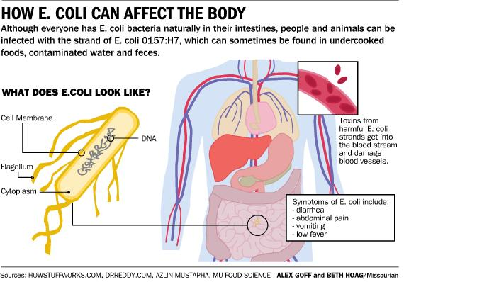 an analysis of ecoli a deadly disease E coli and its sometimes deadly result hemolytic uremic syndrome (hus) – what is it by bill marler on october 1, 2011 posted in food poisoning information.